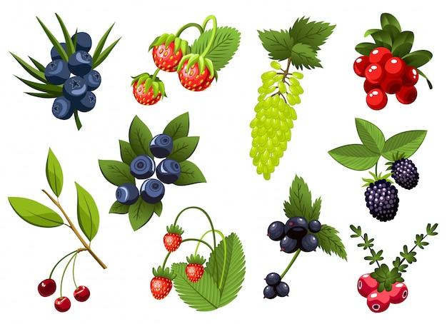 Набор рисованной ветви смородины, виноград, черника, клубника, вишня, ежевика, клюква, ягоды с листьями. свежие летние ягоды.