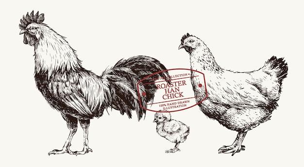 빈티지 스타일의 손으로 그린 치킨 로스터, 한, 병아리 세트
