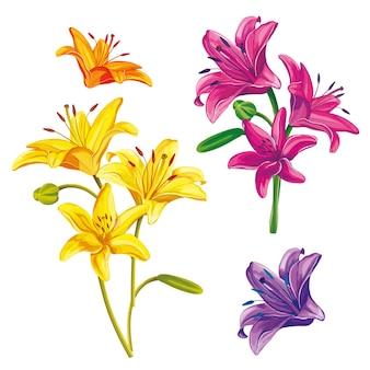 손으로 그린 꽃의 집합입니다. 흰색 배경에 백합 프리미엄 벡터
