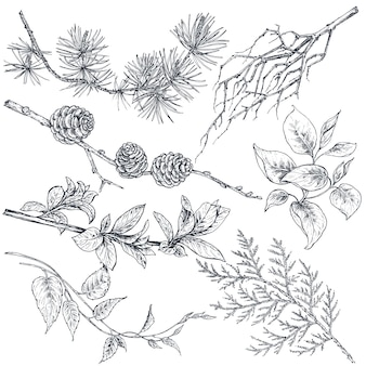 手描きのインクスケッチ春の枝、葉と白い背景で隔離の花と植物のセットです。美しいベクターコレクション