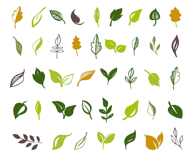 Набор рисованной листьев, зеленый лист, эскизы и рисунки листьев и растений, векторная коллекция зеленых листьев