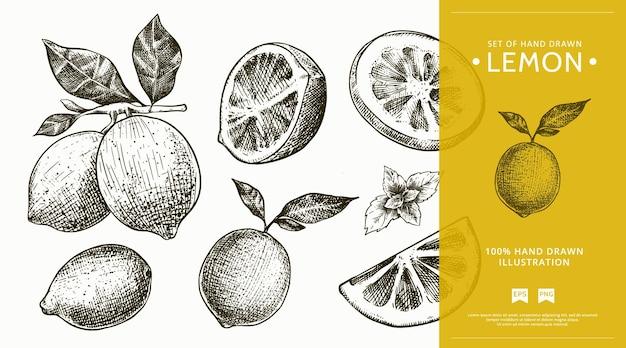 手描きレモンスケッチイラストのビンテージスタイルのセット