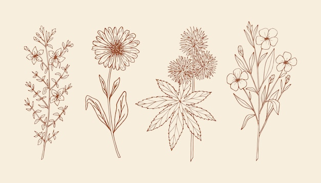 手描きの薬用植物のセット