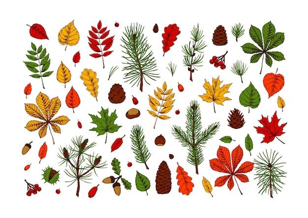 Набор рисованной разноцветных элементов дизайна леса