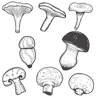 손으로 그린 버섯 흰색 배경에 고립의 집합입니다. 로고, 라벨, 엠 블 럼, 사인, 포스터, 메뉴 요소. 삽화.