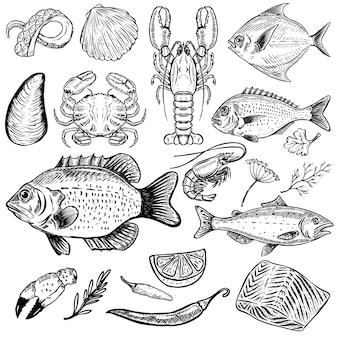 白い背景の手描きシーフードイラストのセットです。魚、カニ、ロブスター、カキ、エビ。スパイス。メニューの要素、ポスター。図