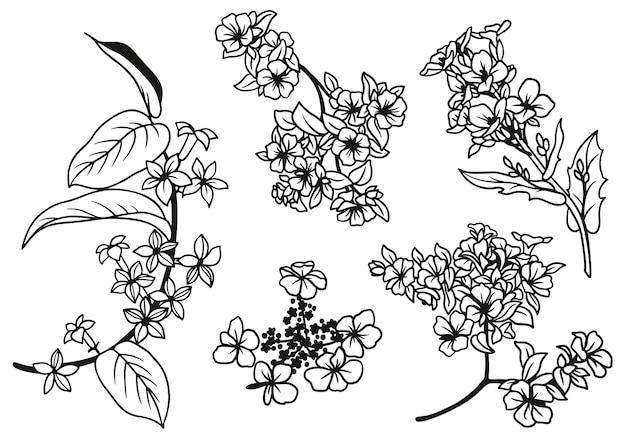 手描きの小さな花と葉のセット