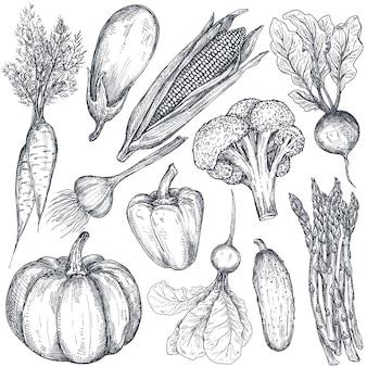 Набор рисованной векторной фермы овощей в стиле эскиза, баклажана, перца, лука, капусты, кукурузы