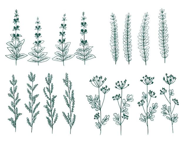 手描きベクトル緑の装飾的な植物の花と枝の要素のセット