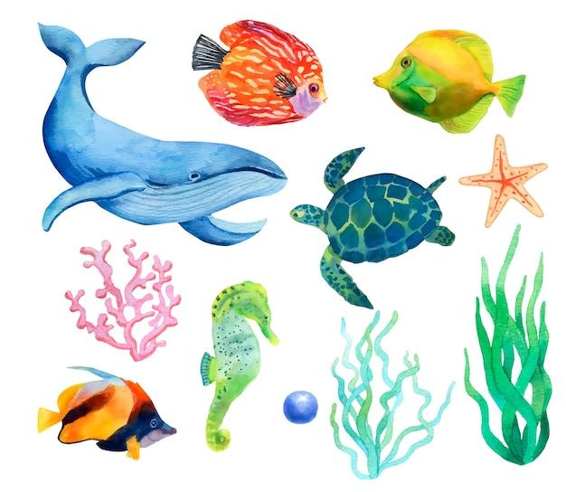 Набор рисованной акварельных морских животных и водорослей