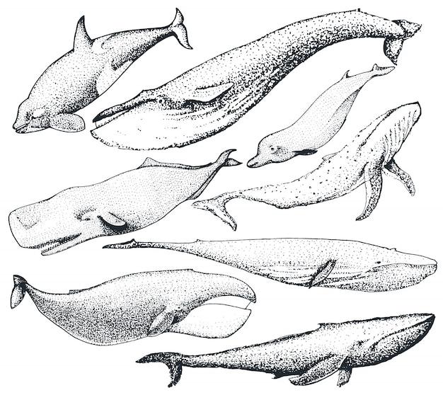 Набор рисованной китов