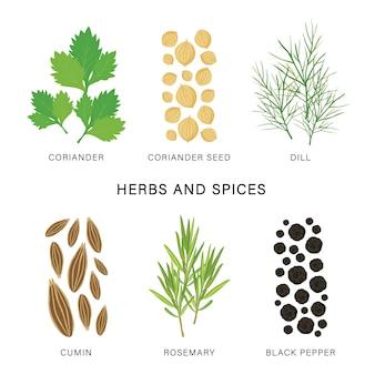 ハーブとスパイスのセットです。有機的で健康的な食品は、要素の図を分離しました。
