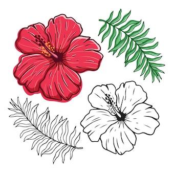 ハイビスカスの花と葉の色付きの手描きスタイルのセット