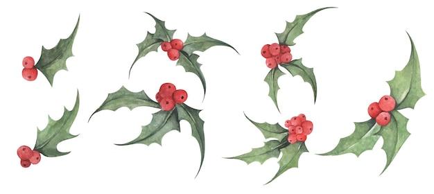 홀리 식물 수채화 그림 크리스마스와 새 해 기호 장식 요소 집합