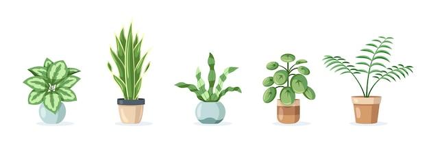 Набор домашних растений в горшках, изолированные на белом фоне в плоский