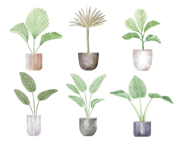 Набор домашних комнатных и уличных растений акварельные иллюстрации