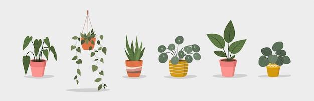 白い背景の上の異なるポットの観葉植物のセット
