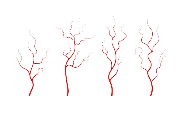 인간의 정맥과 동맥의 집합 붉은 분지 혈관과 모세혈관