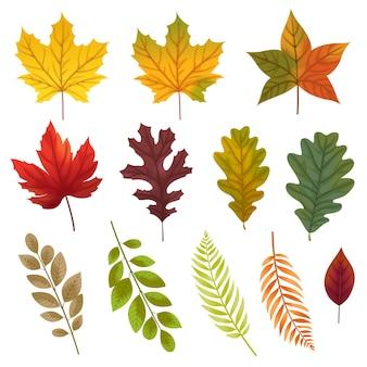 Набор иконок с различными типами листьев.