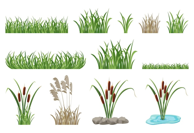 葦、ガマ、シームレスな草の要素のイラストのセットです。湿地の植生、緑の芝生のベクトルコレクション。