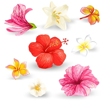 Set of illustrations of tropical hibiscus flowers.