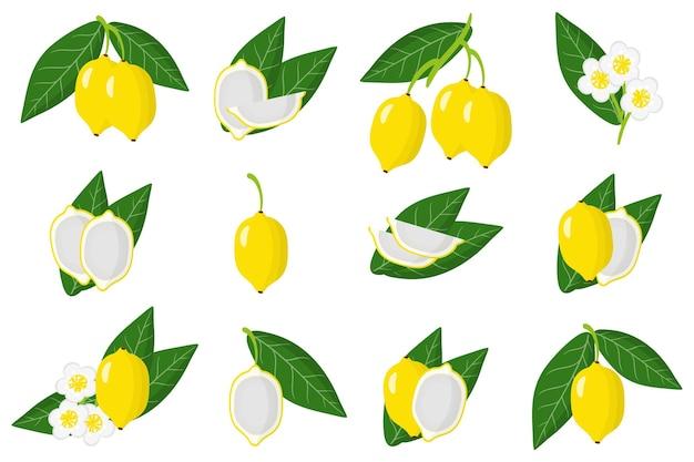 Набор иллюстраций с экзотическими фруктами, цветами и листьями бакупари, изолированными на белом фоне. набор изолированных иконок.