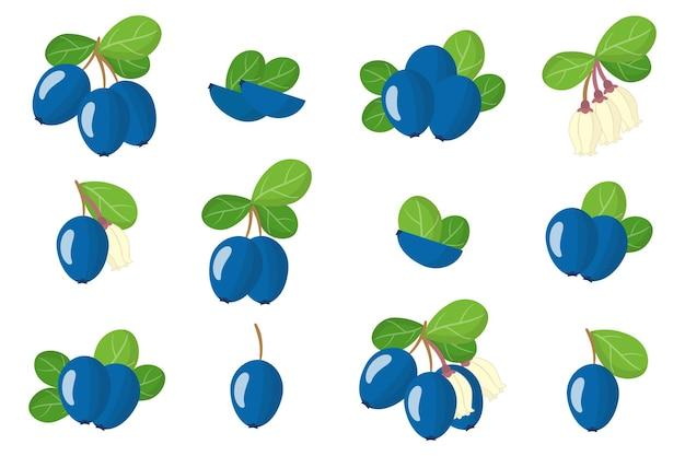 Набор иллюстраций с экзотическими фруктами, цветами и листьями черники, изолированные на белом фоне. набор изолированных иконок.