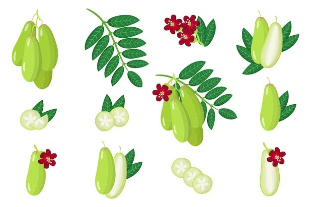 Набор иллюстраций с экзотическими фруктами, цветами и листьями билимби, изолированных на белом фоне. набор изолированных иконок.