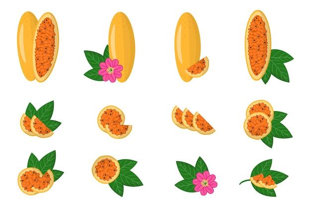 Набор иллюстраций с экзотическими фруктами, цветами и листьями curuba, изолированных на белом фоне.