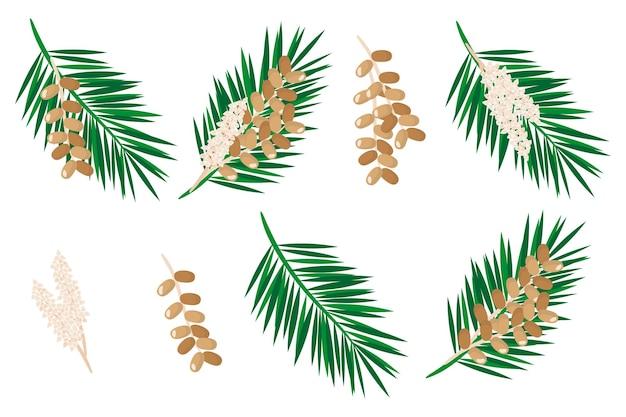 Набор иллюстраций с финиками экзотических фруктов, цветов и листьев, изолированных на белом фоне.