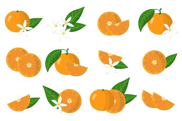 Набор иллюстраций с мандарином экзотических цитрусовых, цветов и листьев, изолированных на белом фоне.