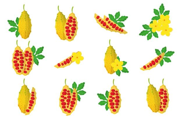 흰색 배경에 격리된 모모르디카 이국적인 과일, 꽃, 잎이 있는 삽화 세트.