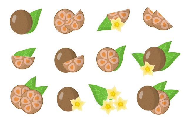 僧侶のエキゾチックな果物、花、葉が白い背景で隔離のイラストのセットです。