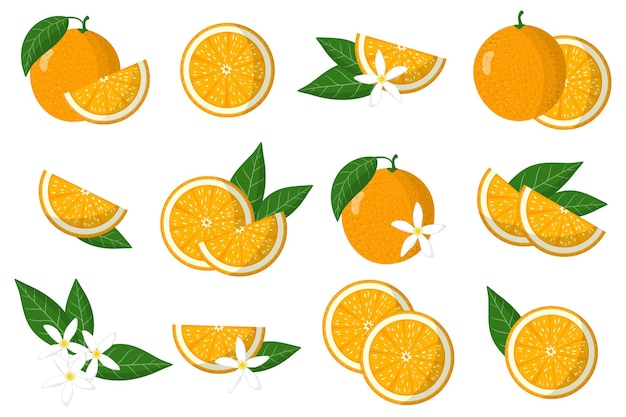 Набор иллюстраций с оранжевыми экзотическими цитрусовыми, цветами и листьями, изолированными на белом фоне.