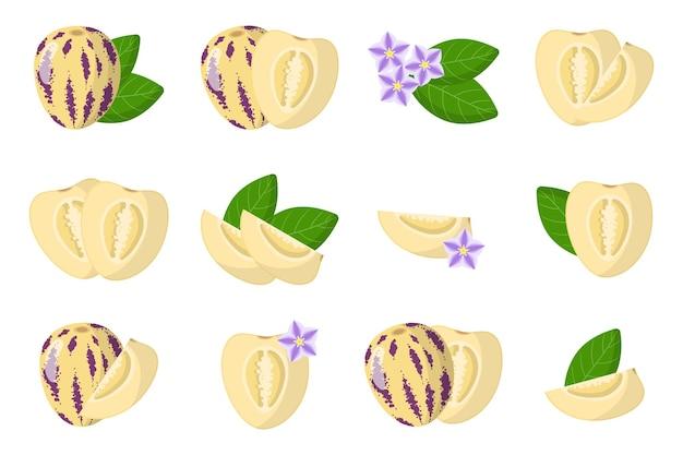 Набор иллюстраций с экзотическими фруктами, цветами и листьями pepino, изолированных на белом фоне.