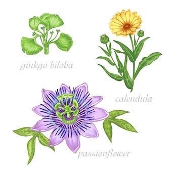薬用植物の画像のセット。美しさと健康。バイオ添加物。イチョウ、パッションフラワー、コレンデュラ。