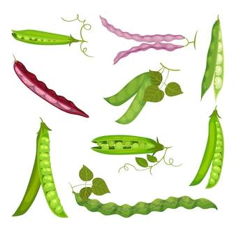 エンドウ豆の鞘と豆の画像のセット。白い背景のイラスト。 Premiumベクター