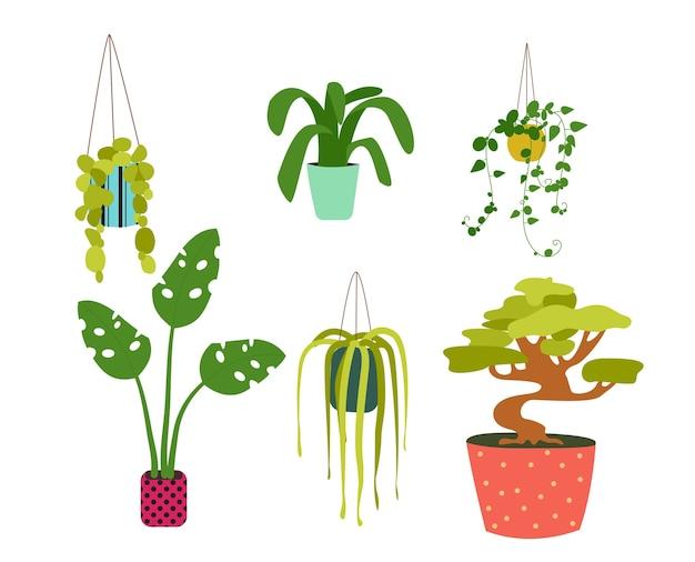Набор комнатных растений, изолированные на белом
