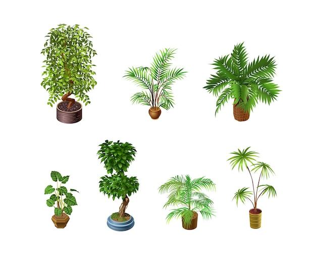 分離された屋内植物のセット