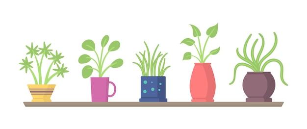 선반 그림에 실내 식물의 집합