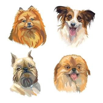 孤立した犬種の頭パピヨン、ポメラニアン、ブリュッセルグリフォン、ペキニーズのセット。ベクトルイラスト。