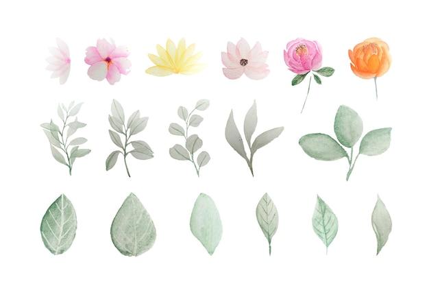 孤立した花の葉の花の水彩画のセット