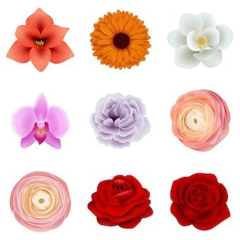 격리 된 꽃 세트