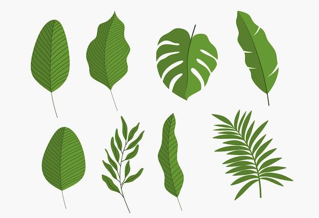 Набор изолированных зеленых листьев.