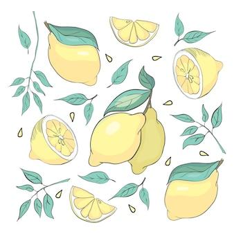 Набор изолированных набросал лимонов и листьев для плакатов