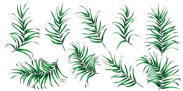 Набор изолированных тропических пальмовых листьев