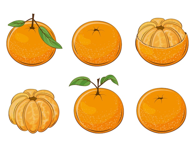 Набор сочных мандаринов. свежие фрукты.