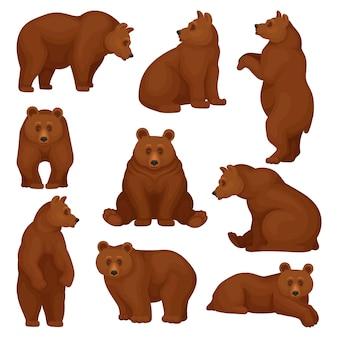 Набор большого медведя в разных позах. дикий лесной существо с коричневым мехом. мультипликационный персонаж большого млекопитающего животного.
