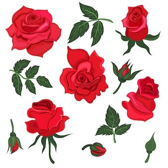 잎과 흰색 배경에 고립 된 빨간 장미 꽃의 집합입니다. 제도법.
