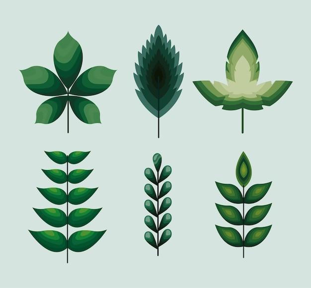 Набор иконок листья с дизайном иллюстрации зеленого цвета